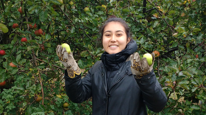 Volunteer Plucking Apples Smiling