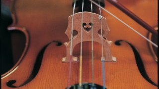 Close up image of a violin